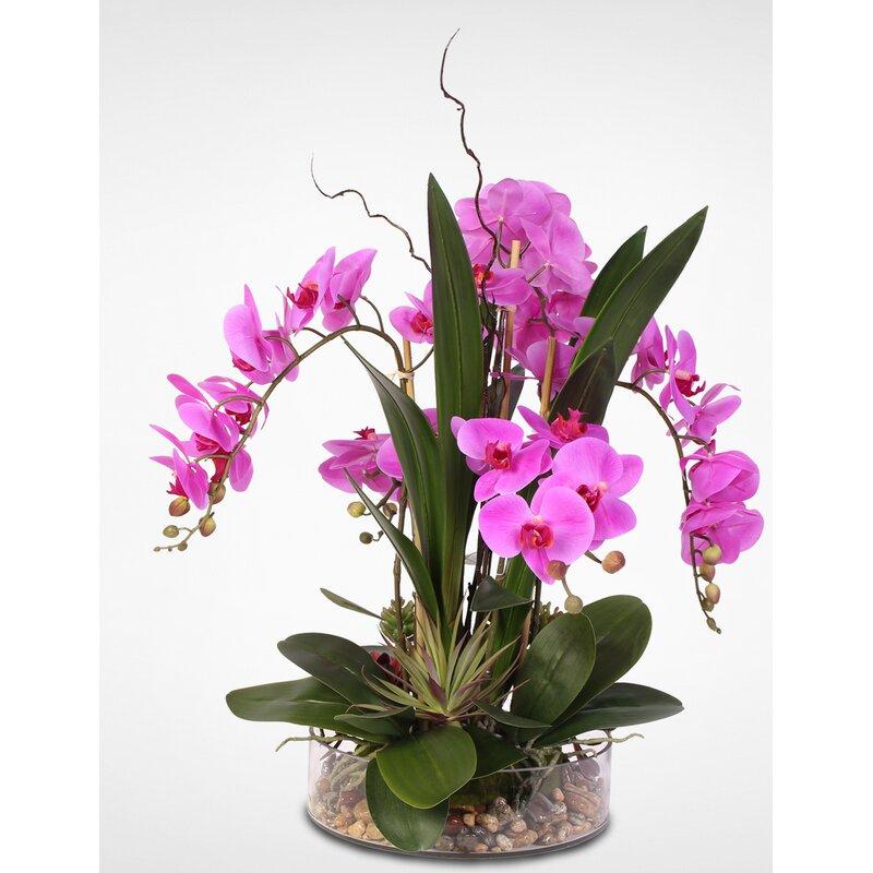 Primrue Orchids Floral Arrangements And Centerpieces In Pot Wayfair