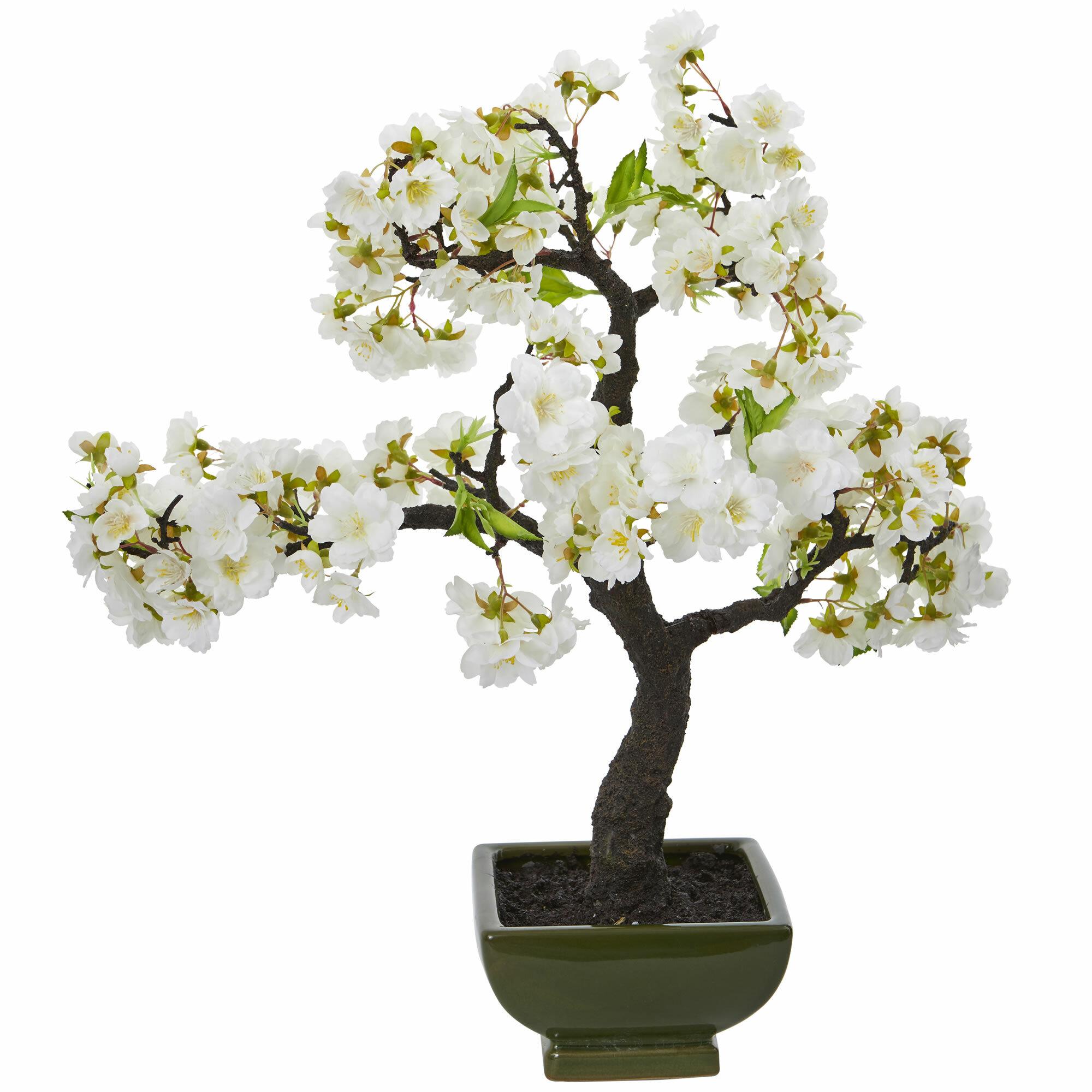 Bloomsbury Market Cherry Blossom Flowering Bonsai Tree Wayfair