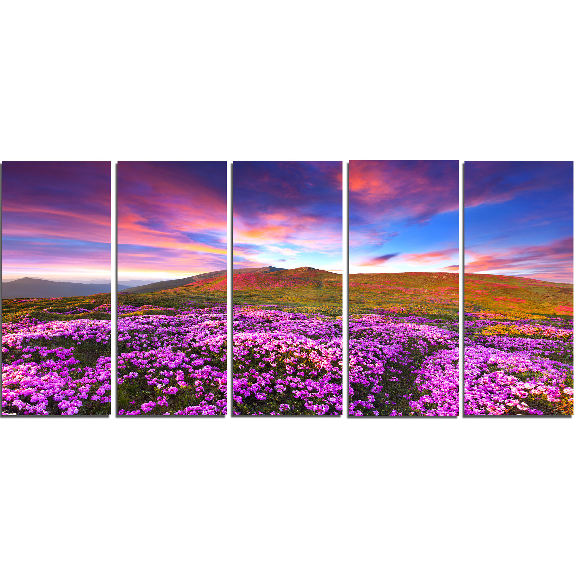 Designart Magic Pink Rhododendron Flowers 5 Piece Photographic Print On Wrapped Canvas Set Wayfair