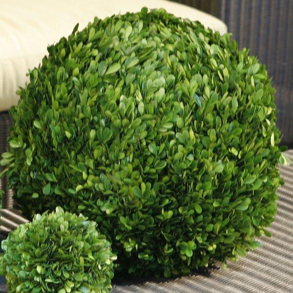 Decorative Boxwood Balls Endearing Preserved Boxwood Balls  Wayfair Design Ideas