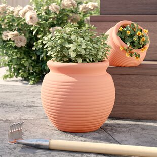 Terracotta Pots Wayfair