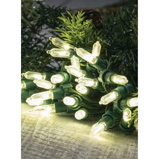 Cayuga 32.04 ft. 50-Light Mini String Light (Set of 2) by The Holiday Aisle