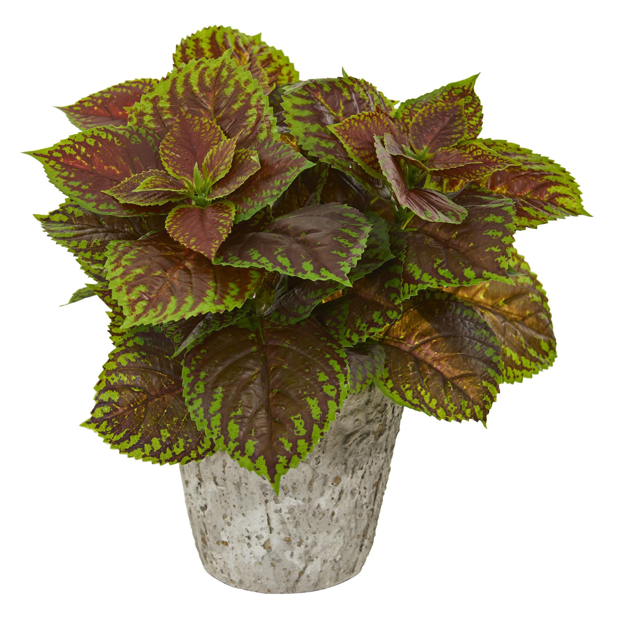 Charlton Home 14 Artificial Foliage Plant In Planter Wayfair