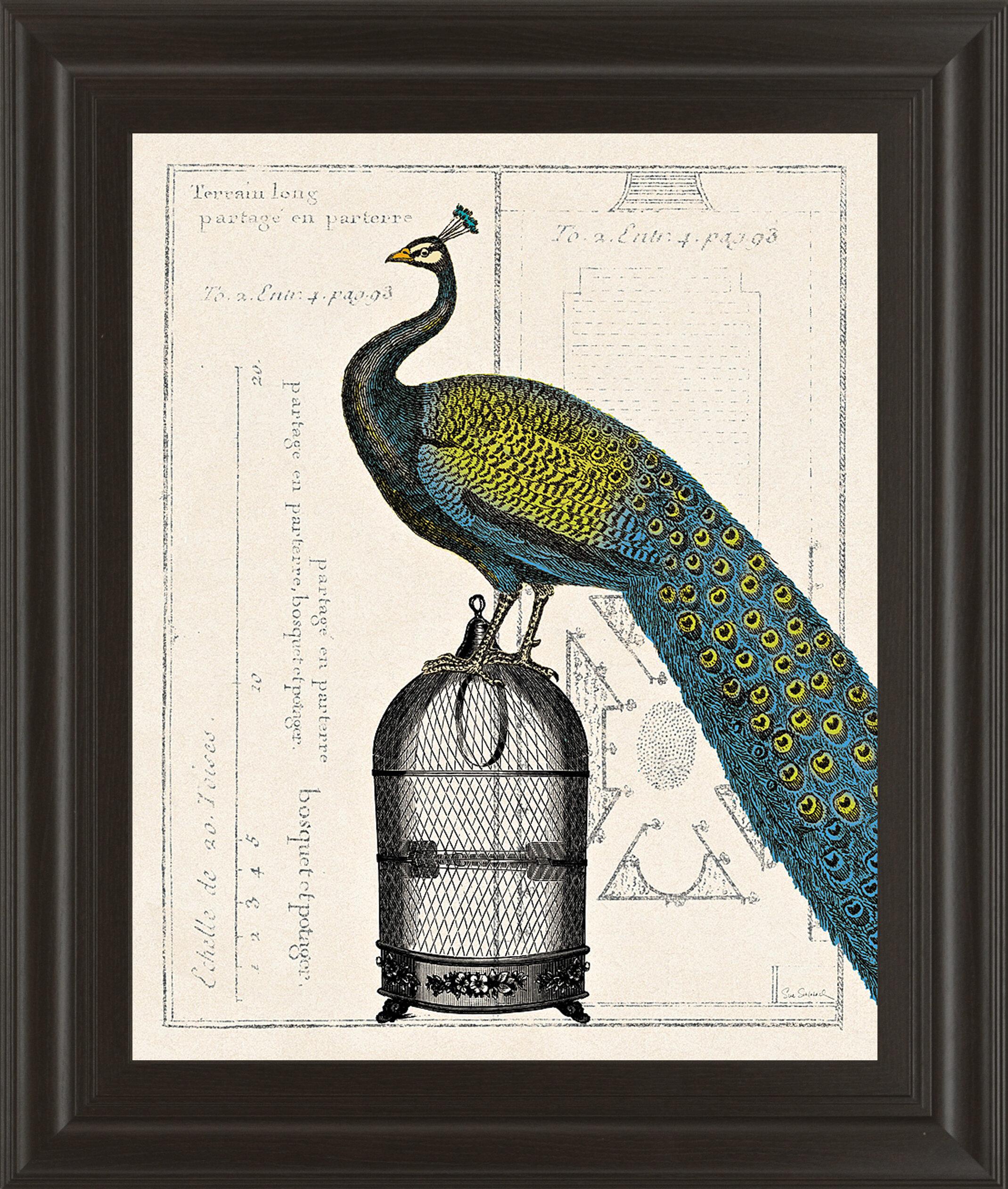 Classyartwholesalers Peacock Birdcage Ii By Sue Schlabach Framed Graphic Art Wayfair