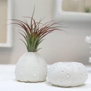 Amit Sea Urchin 2 Piece Table Vase Set