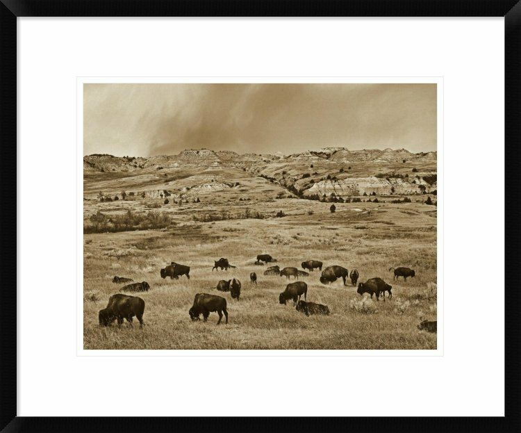 Global Gallery American Bison Herd Grazing On Shortgrass Prairie Theodore Roosevelt National Park North Dakota By Tim Fitzharris Framed Photographic Print Wayfair