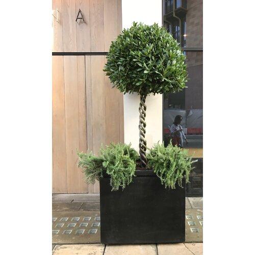 Melvina Fibreglass Planter Box Bloomsbury Market Size: H55 x