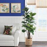 Fiddle Leaf Fig Tree with Basket