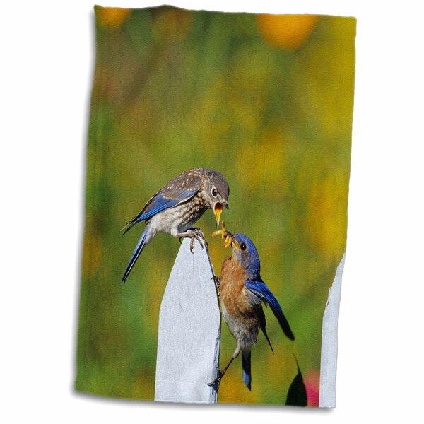 East Urban Home Givens Eastern Bluebird Male Feeding Fledgling On Picket Fence Near Flowers Tea Towel Wayfair