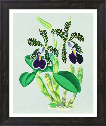 Evive Designs Vintage Orchids By Evie Alessandria Framed Graphic Art Wayfair