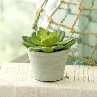 Faux succulent arrangement.