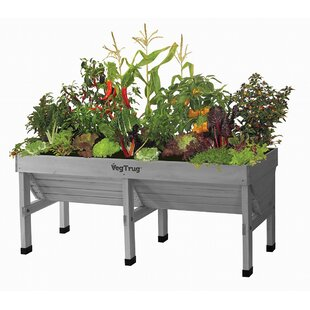 Tall Indoor Planters | Wayfair.co.uk