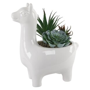 Llama Succulent Plant