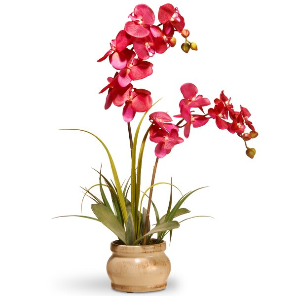 Orchids youll love wayfair mightylinksfo