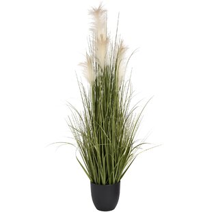 Floor Foliage Grass In Pot By The Recipe Flowers
