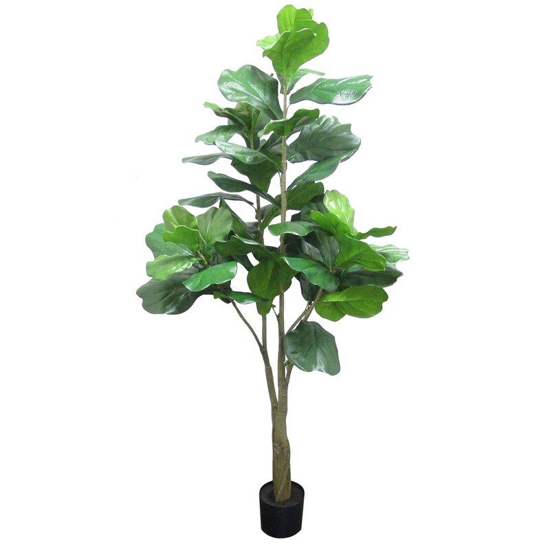 Winston Porter Fiddle Leaf Fig Tree In Planter Reviews Wayfair