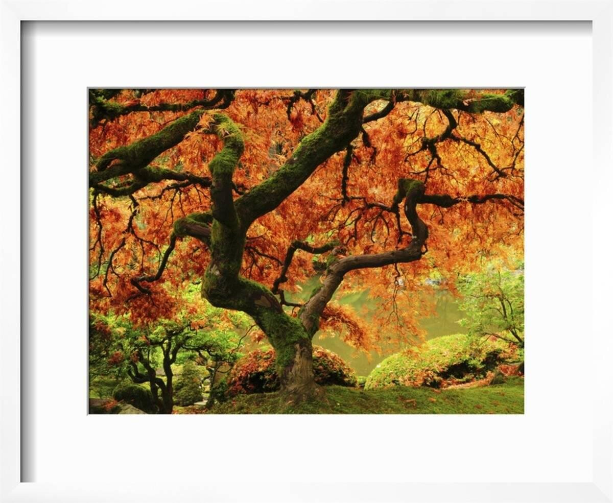 Bloomsbury Market \'Japanese Maple in Full Fall Color, Portland ...