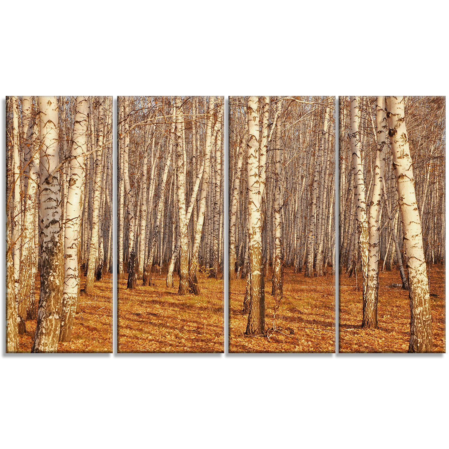 Designart Dense Birch Forest In The Fall 4 Piece Photographic Print On Wrapped Canvas Set Wayfair