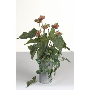 Athurium Plant In Pot Image