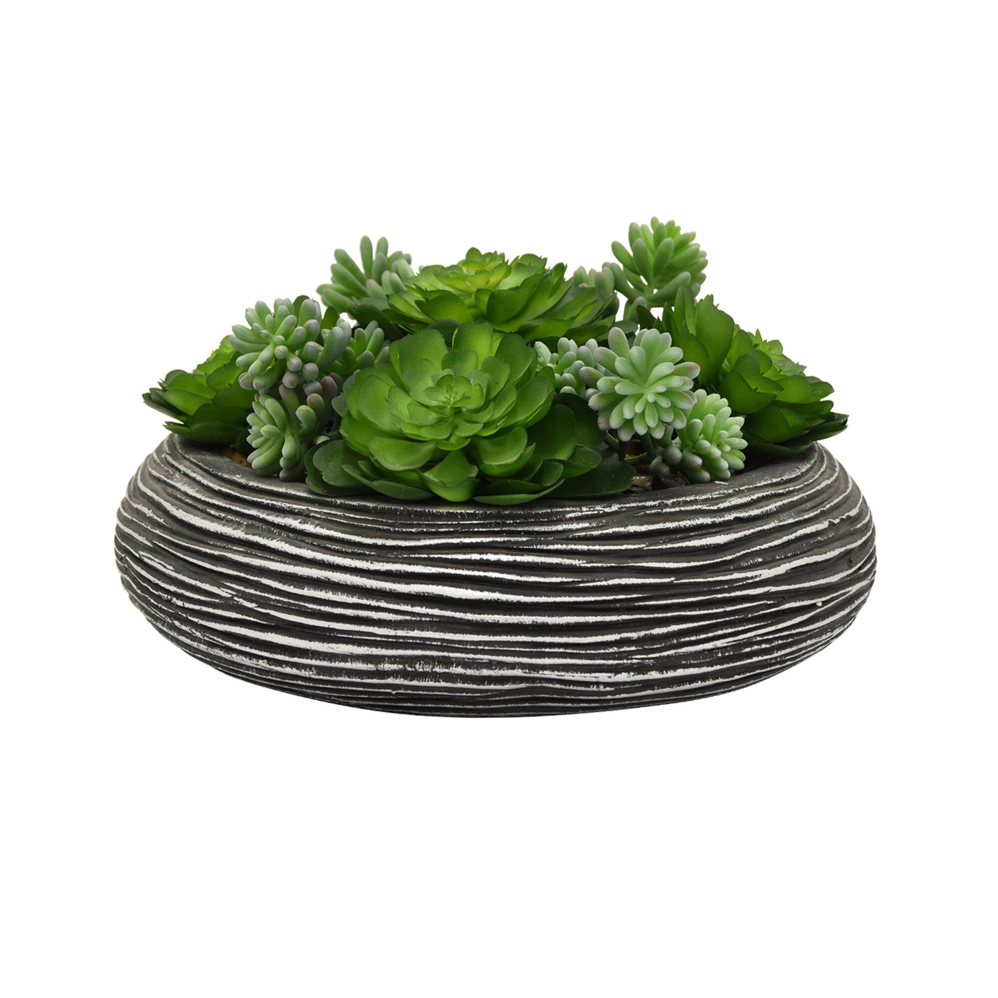 Faux Desktop Succulent Plant In Pot Reviews Joss Main