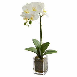 Artificial Orchid Phalaenopsis Floral Arrangement in Vase