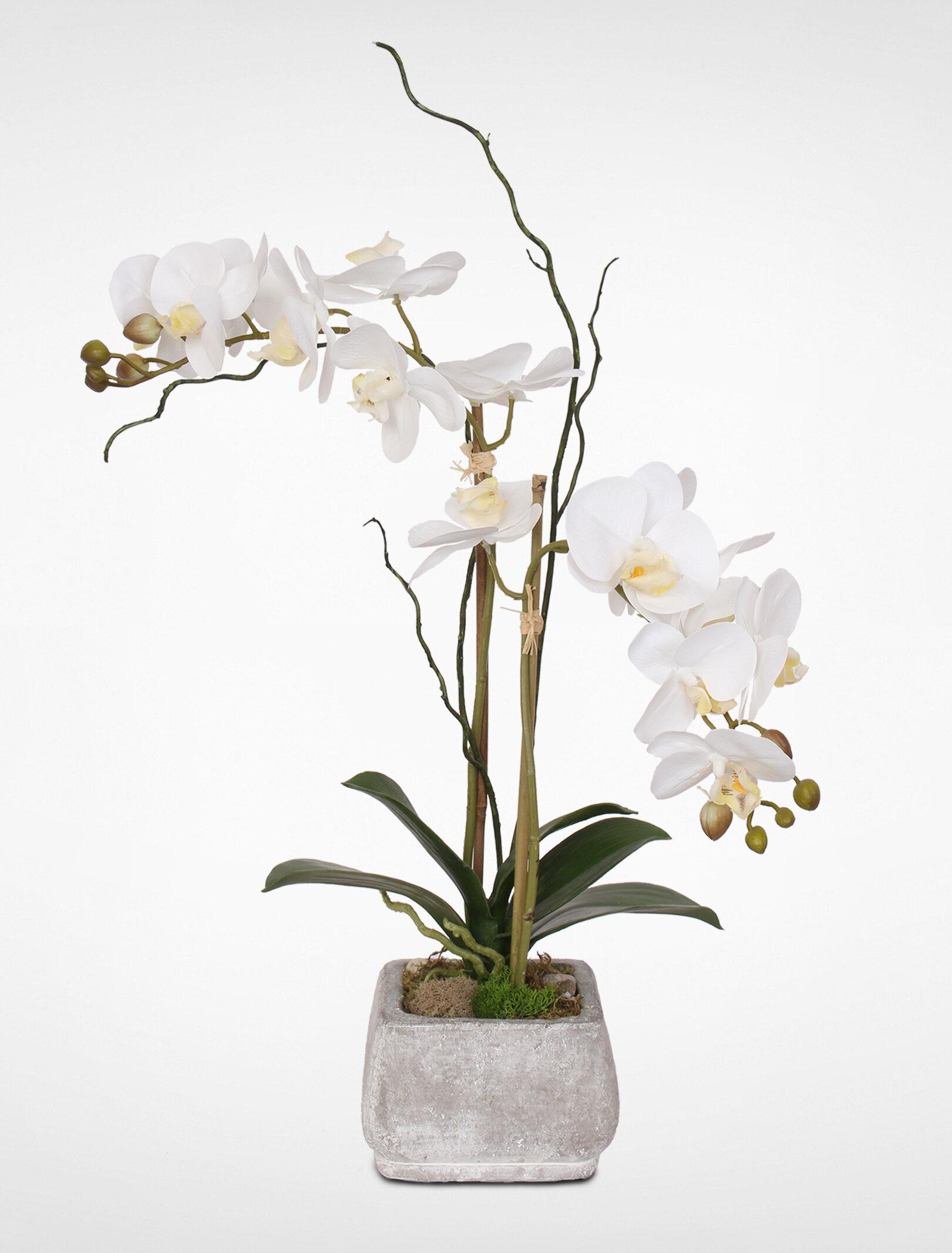 World Menagerie Orchids Floral Arrangement In Pot Reviews Wayfair