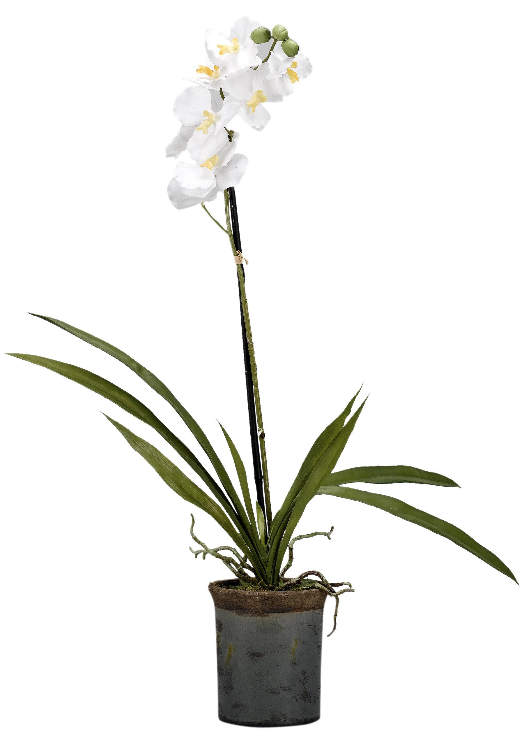 Bloomsbury Market Vanda Orchids Floral Arrangement In Planter Wayfair