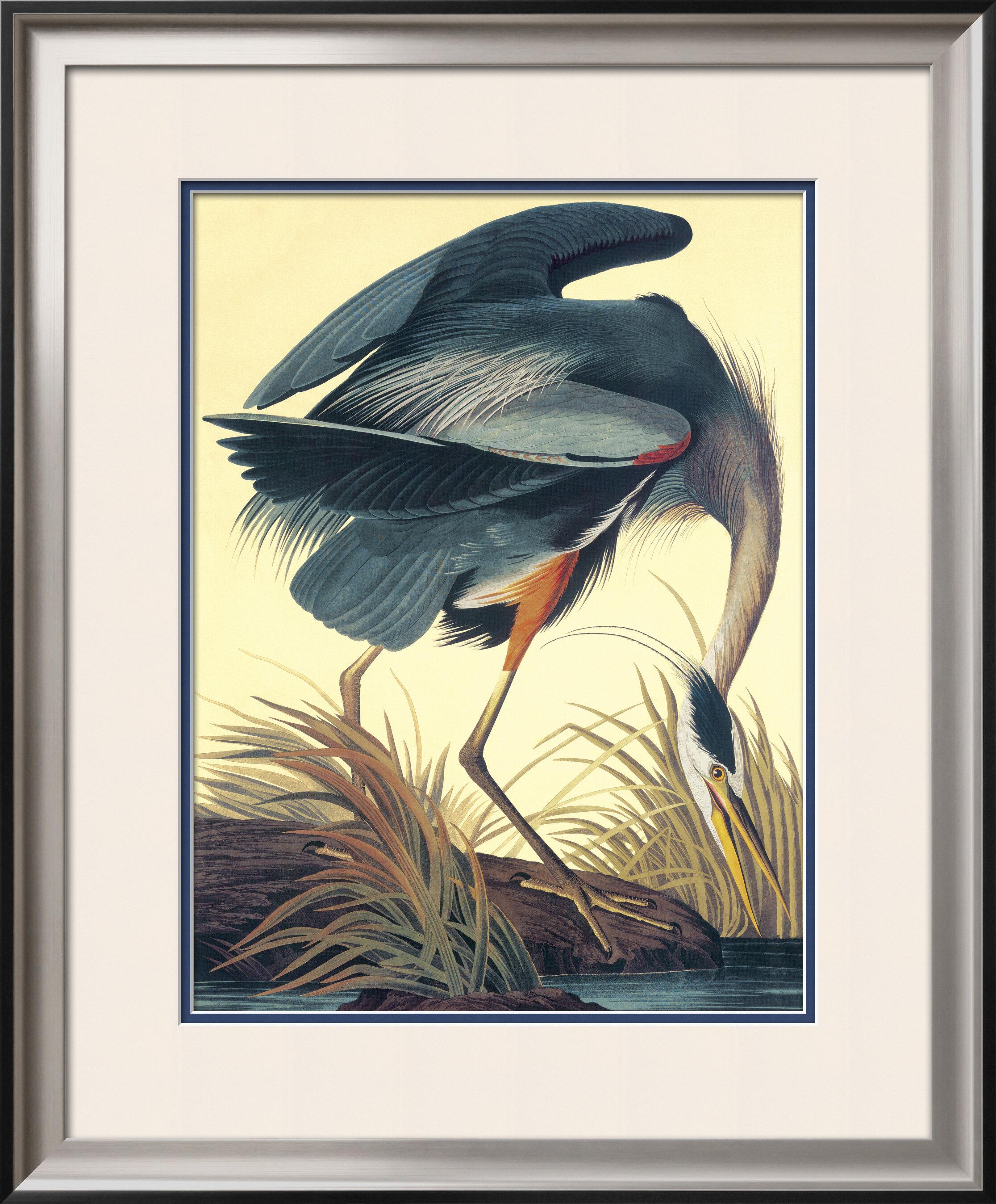 Great Blue Heron\' by John James Audubon Framed Graphic Art   Joss & Main