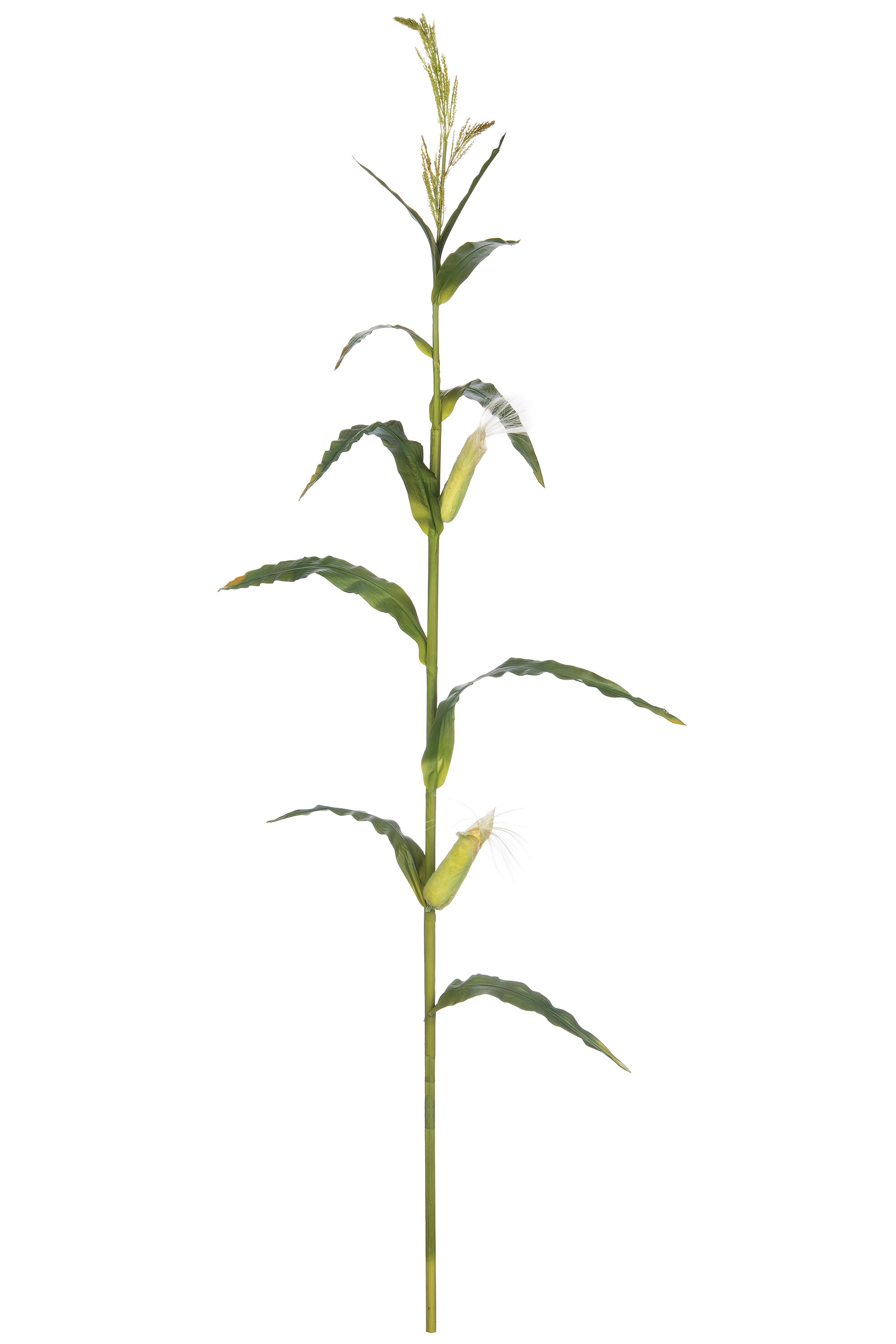 Rosalind Wheeler Artificial Corn Stalk Foliage Plant Wayfair The best selection of royalty free corn stalk vector art, graphics and stock illustrations. rosalind wheeler artificial corn stalk foliage plant wayfair