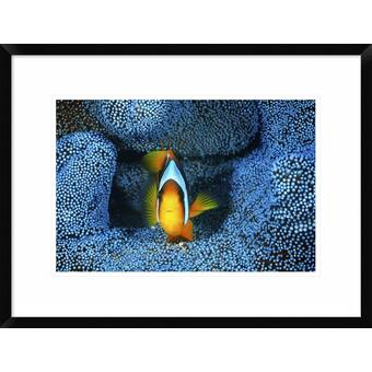 Buyenlarge The Brook Trout Showing Brilliant Or Breeding Season Coloration By H H Leonard Graphic Art Wayfair