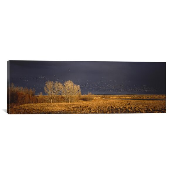 East Urban Home Flock Of Snow Geese Flying At Bosque Del Apache National Wildlife Reserve New Mexico Photographic Print On Canvas Wayfair