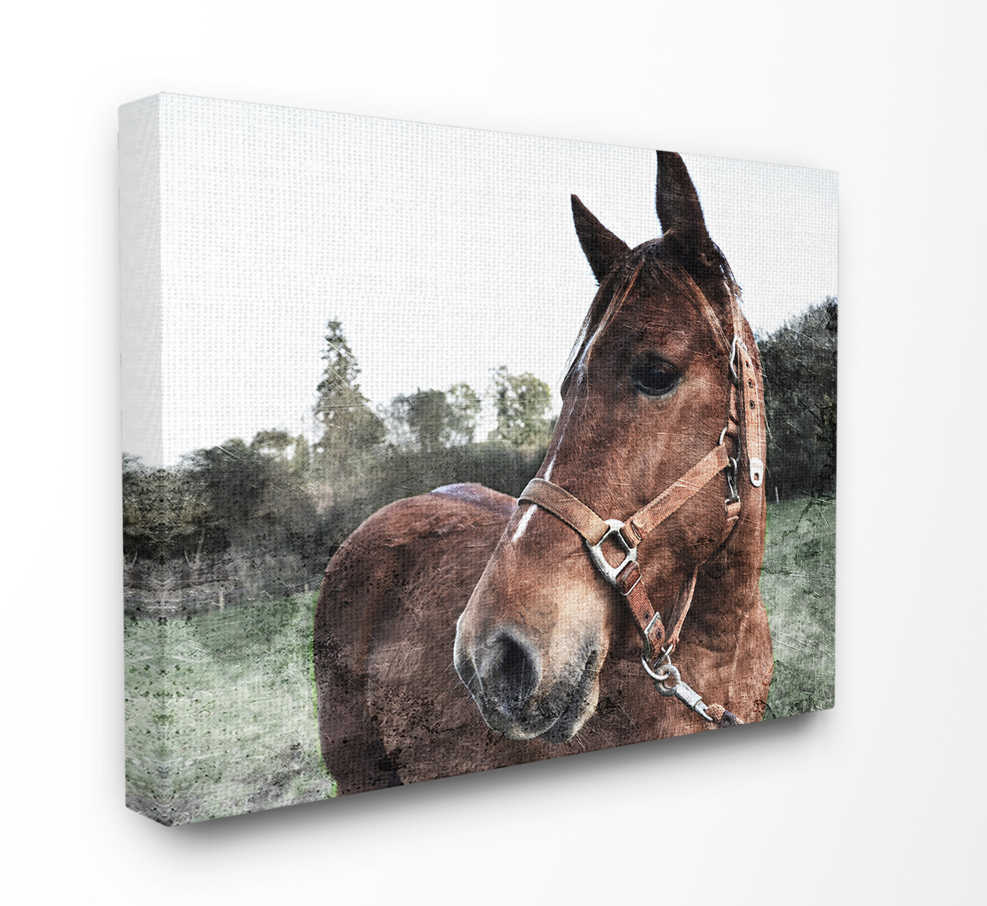 Gracie Oaks Horse Posing In Field By Milli Villa Floater Frame Photographic Print Wayfair Ca