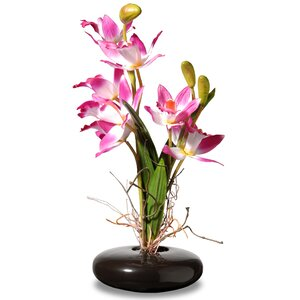 Orchid Floral Arrangement in Pot