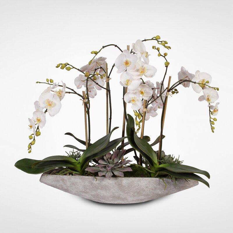 floral home decor orchid floral design wayfair.htm world menagerie orchids floral arrangements and centerpieces in  world menagerie orchids floral
