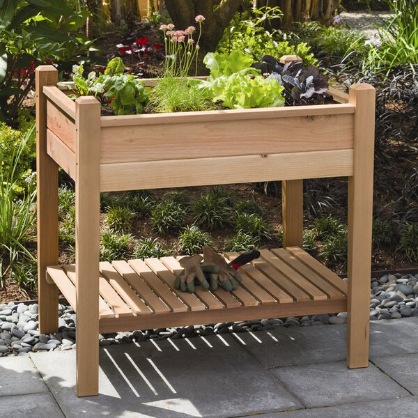 Phat Tommy 3 ft x 2 ft Cedar Raised Garden