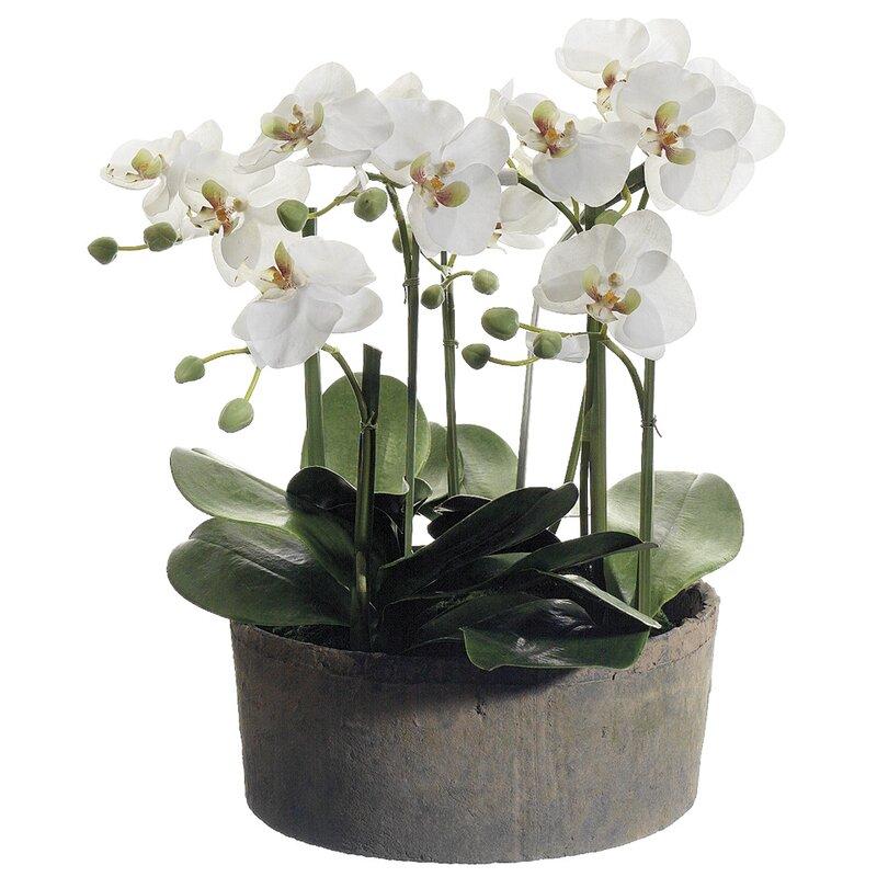 floral home decor orchid floral design wayfair.htm phalaenopsis orchid floral arrangements in clay pot   reviews  phalaenopsis orchid floral arrangements