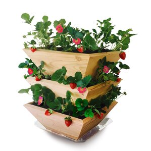 Homegrown Gourmet Garden Strawberry Patch Tower Wood Vertical Garden Planter