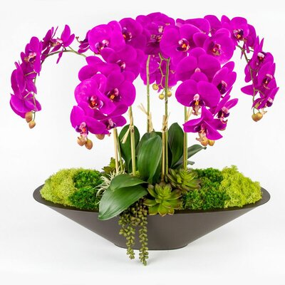 T&C Floral Company Orchid in Metal Boat Color: Fuschia