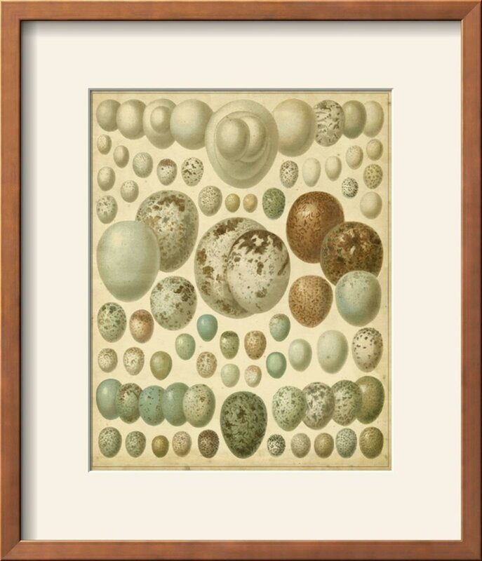 'Vintage Bird Eggs I' Framed Print