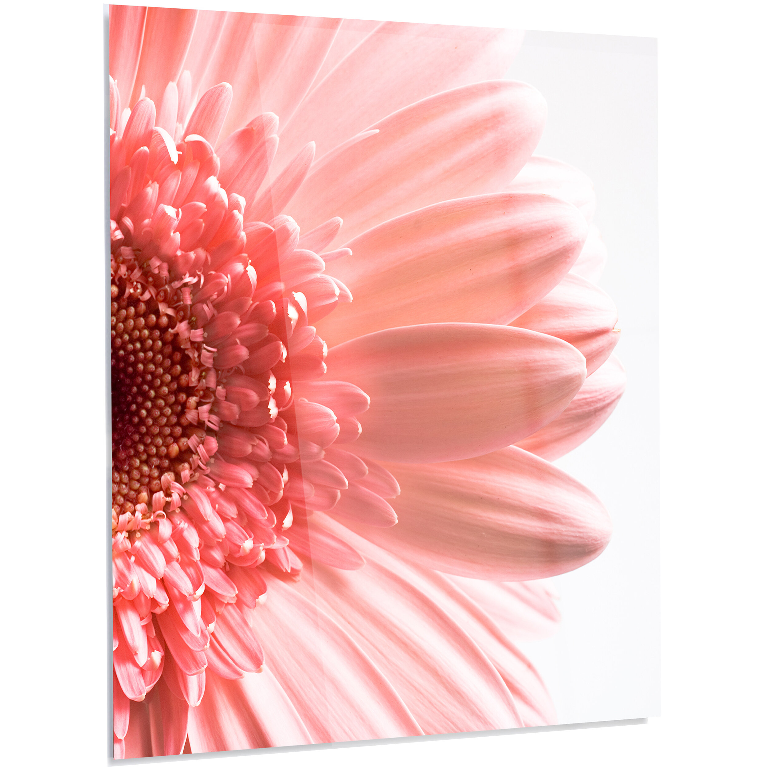 Designart Large Pink Daisy Flower Petals Led Photographic Print On