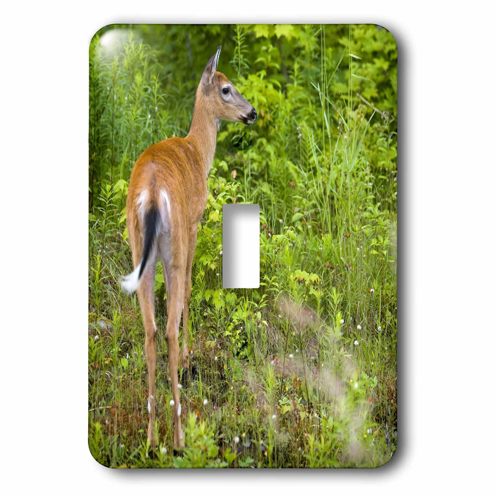 3drose Whitetail Deer Pittsburg New Hampshire 1 Gang Toggle Light Switch Wall Plate Wayfair