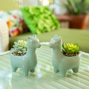 2 Piece Llama Succulent Plant in Pot
