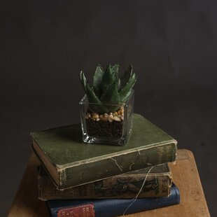 7cm Aloe Succulent Plant In Pot By Hill Interiors