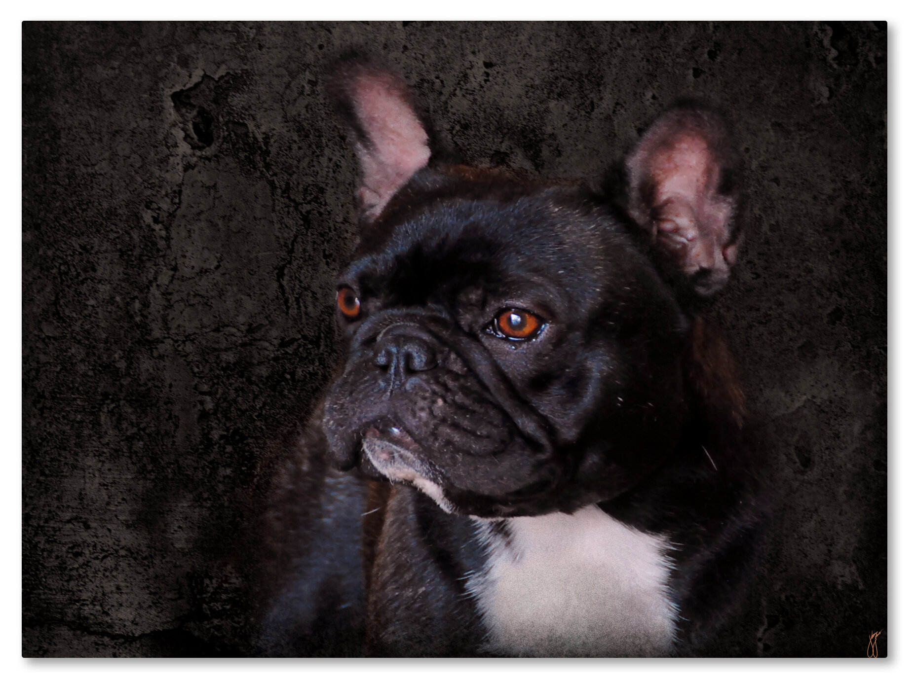 BLACK FRENCH BULLDOG CAT PAINTING STYLE BOX CANVAS PRINT WALL ART PICTURE
