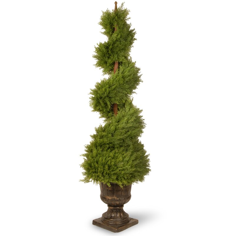 Primrue Floor Moss Topiary In Urn Reviews Wayfair