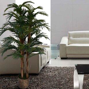 Palm Tree Home Decor Wayfair