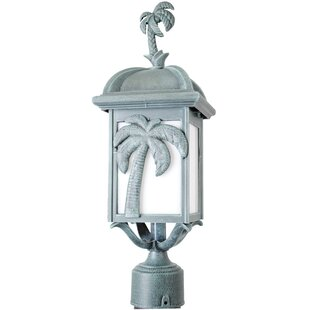 Alcott Hill Penfield Palm Tree Series 1 Light 18.5