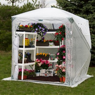 Flowerhouse Orchidhouse 6 Ft. W x 6 Ft. D Greenhouse