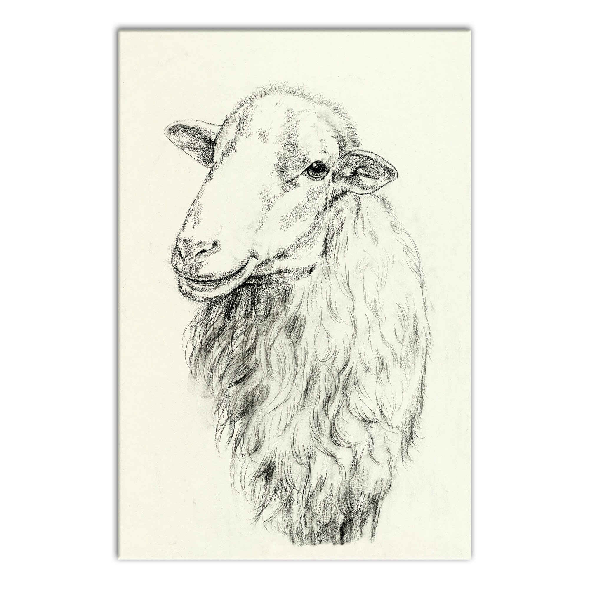 Farmhouse Sheep Sketch Wrapped Canvas Drawing Print On Canvas