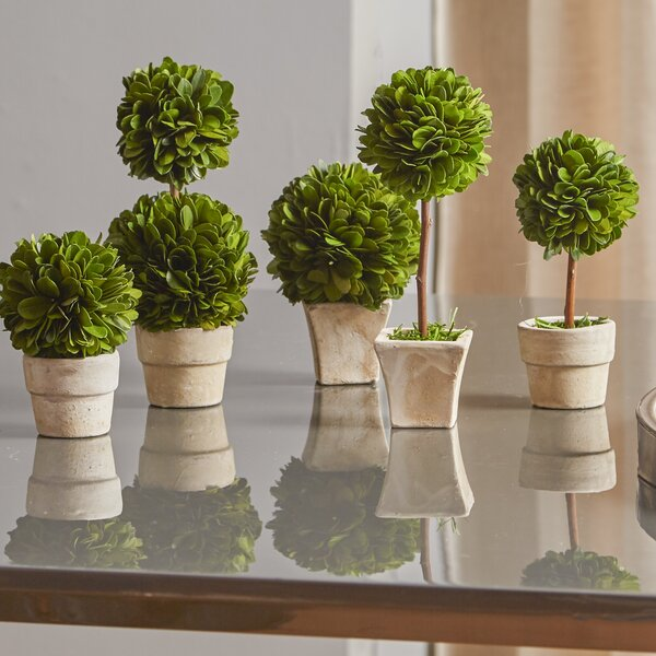 5 Piece Gaudreau Mini Boxwood Topiary In Pot Set Reviews Birch Lane